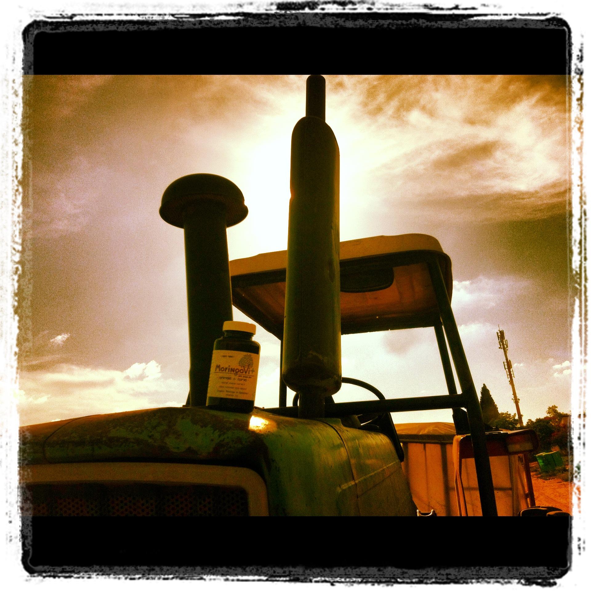 מורינגה לשימושים תעשייתיים וחקלאיים